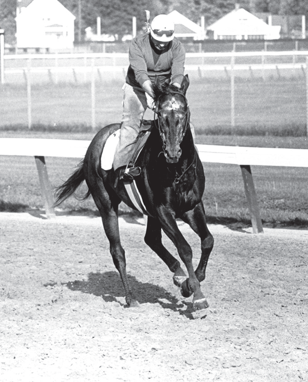 Reprinted from Dancer's Image: The Forgotten Story of the 1968 Kentucky Derby by Milton C. Toby courtesy of Blood-Horse (pg. 32, The History Press, 2011).